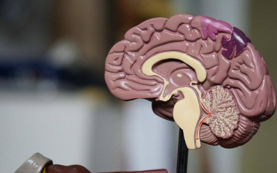 What is Neuroplasticity?